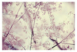 Central Park in Bloom #5 - Fine Art Photograph