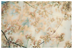 Central Park in Bloom #3 - Fine Art Photograph
