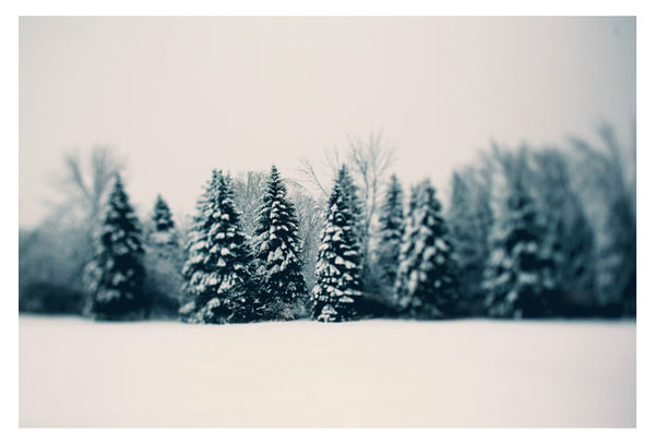 Winter and Woods - Fine Art Photograph