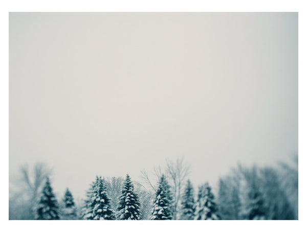 Snow and Pine - Fine Art Photograph