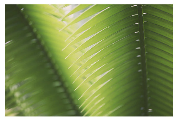 Jungle - Fine Art Photograph