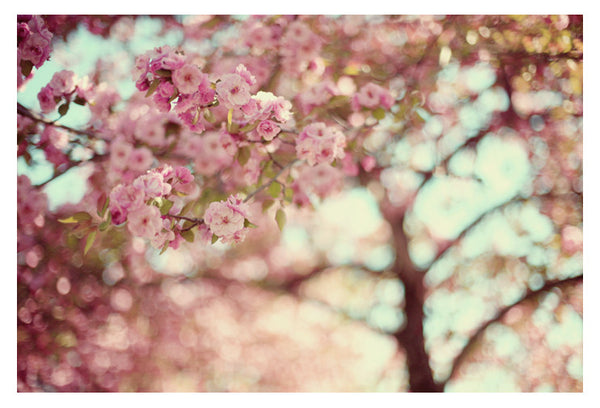 Pretty In Pink - Fine Art Photograph