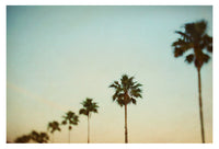 The Palms #3 - Fine Art Photograph