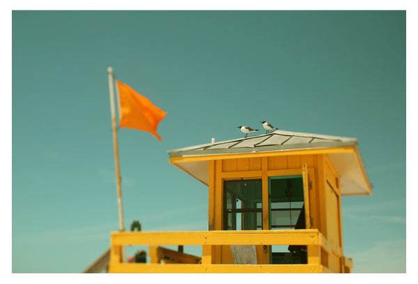 Yellow Flag #1 - Fine Art Photograph