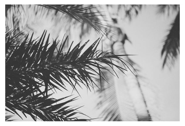Palm In Gray #1 - Fine Art Photograph