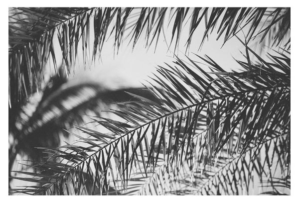 Palm In Gray #2 - Fine Art Photograph