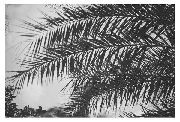 Palm In Gray #3 - Fine Art Photograph