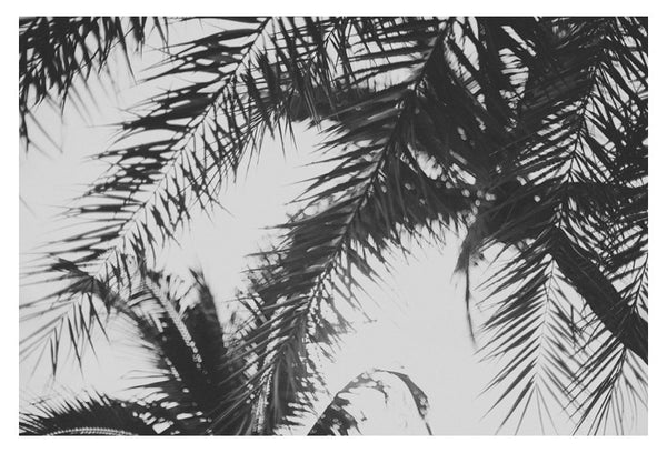 Palm In Gray #4 - Fine Art Photograph