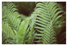 Fern #8 - Fine Art Photograph