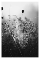 Fog & Web - Fine Art Photograph