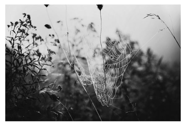 Fog & Field - Fine Art Photograph