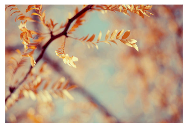 Autumn #3- Fine Art Photograph
