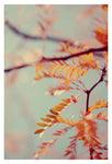 Autumn #2- Fine Art Photograph