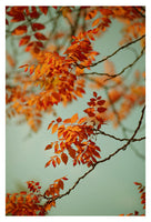 Autumn #5 - Fine Art Photograph