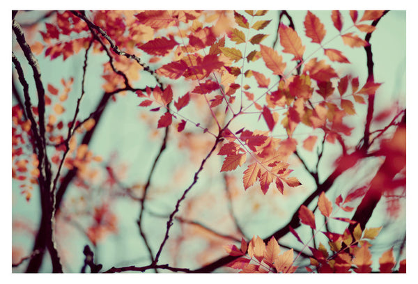 Autumn #4 - Fine Art Photograph