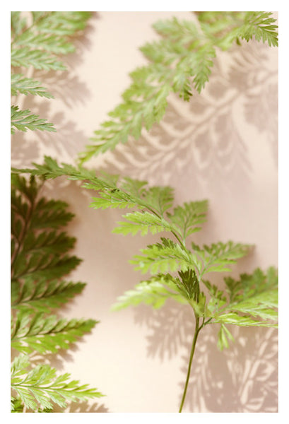 Shadow Fern #2 - Fine Art Photograph