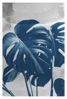 Blue Monstera #1 - Fine Art Photograph