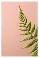 Fern Study On Pink #2 - Fine Art Photograph
