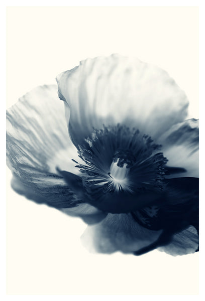 Cyan Poppy #3 - Fine Art Photograph