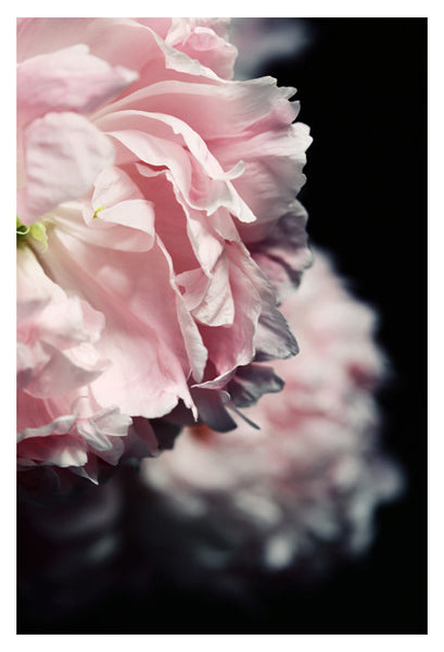 Posy - Fine Art Photograph