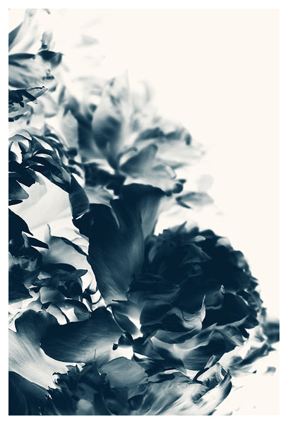 Blue Paeonia #8 - Fine Art Photograph