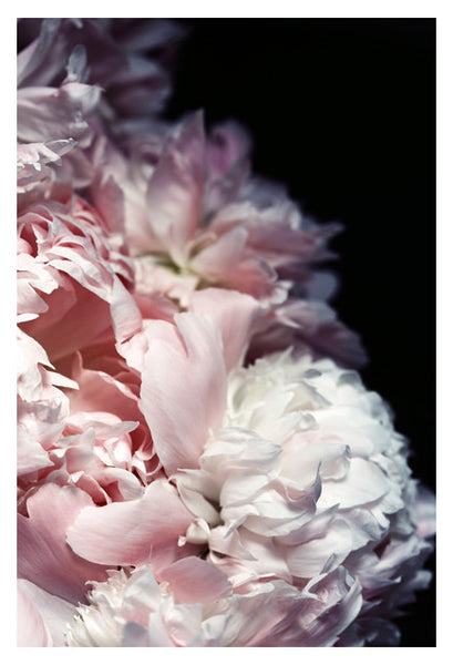 Efflorescence - Fine Art Photograph