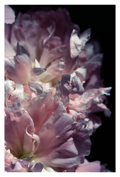 Inflorescence - Fine Art Photograph
