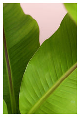 Foliage - Fine Art Photograph
