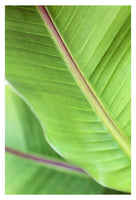 Greenery - Fine Art Photograph