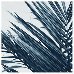 Blue Palm #2 -  Fine Art Photograph