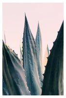 Agave Daydreams -  Fine Art Photograph