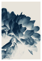 Blue Paeonia #3 -  Fine Art Photograph