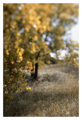 Fields Of Gold - Fine Art Photograph