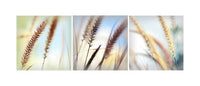 Pale Triptych - Fine Art Photograph