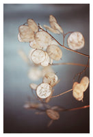There is a Softness (vertical) - Fine Art Photograph