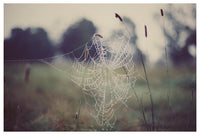 Web #1 - Fine Art Photograph