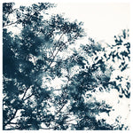 Blue Leaves #1 -  Fine Art Photograph