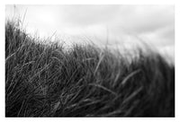 Beach Grass #2 - Fine Art Photograph