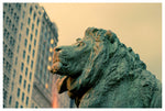 Lion in front of the Art Institute of Chicago. Photographed by Alicia Bock.