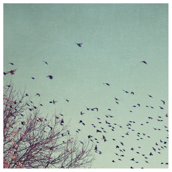 Winter Birds- Fine Art Photograph
