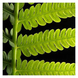 "Green Leaf- 5""x5"" Matted- Friday Outlet"