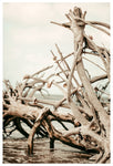 Driftwood Days - Fine Art Photograph