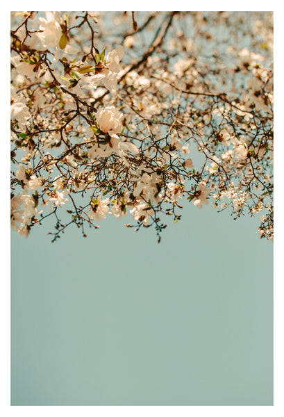 Falling Into Spring - Fine Art Photograph