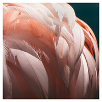 Flamingo #3 - Fine Art Photograph