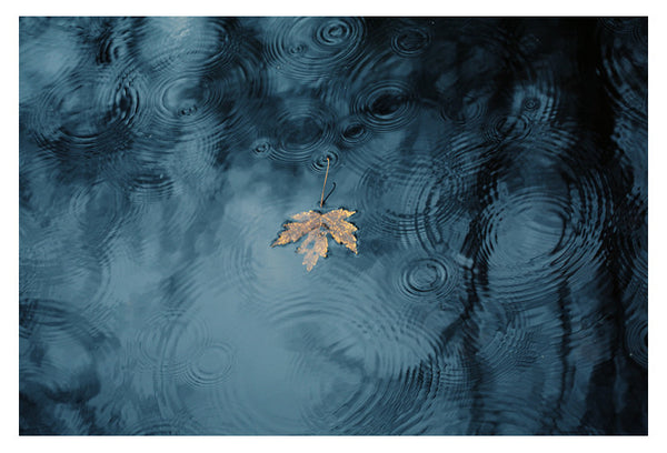 Friday's Rain - Fine Art Photograph