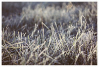 Frosted #2 - Fine Art Photograph