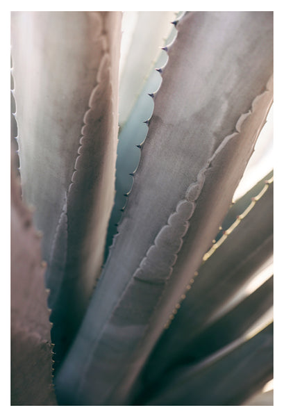 Gray Agave #1 -  Fine Art Photograph