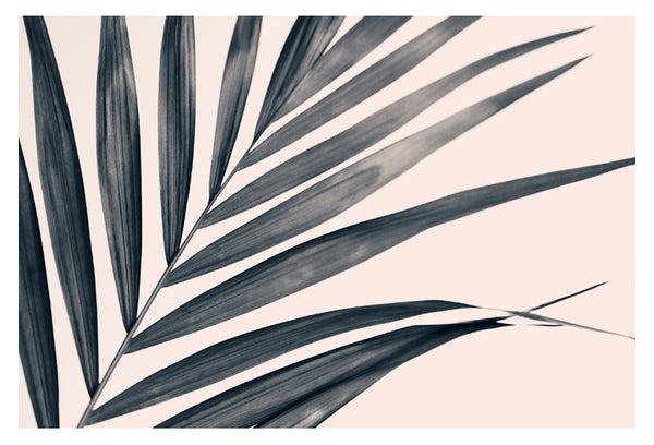 Gray Palm #1 - Fine Art Photograph