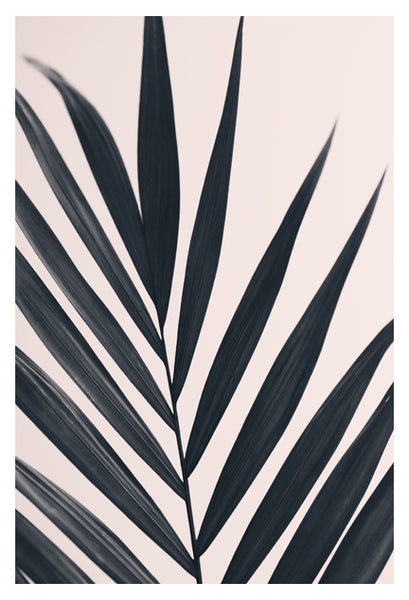 Gray Palm #2 - Fine Art Photograph