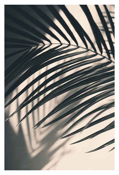 Gray Palm #4 - Fine Art Photograph